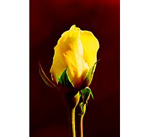 Yellow on Red Photographic Print