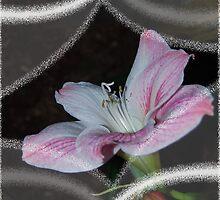 Spring Awakening by designingjudy