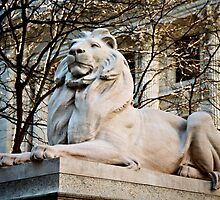 Lion-New York Public Library by DAVID  SWIFT