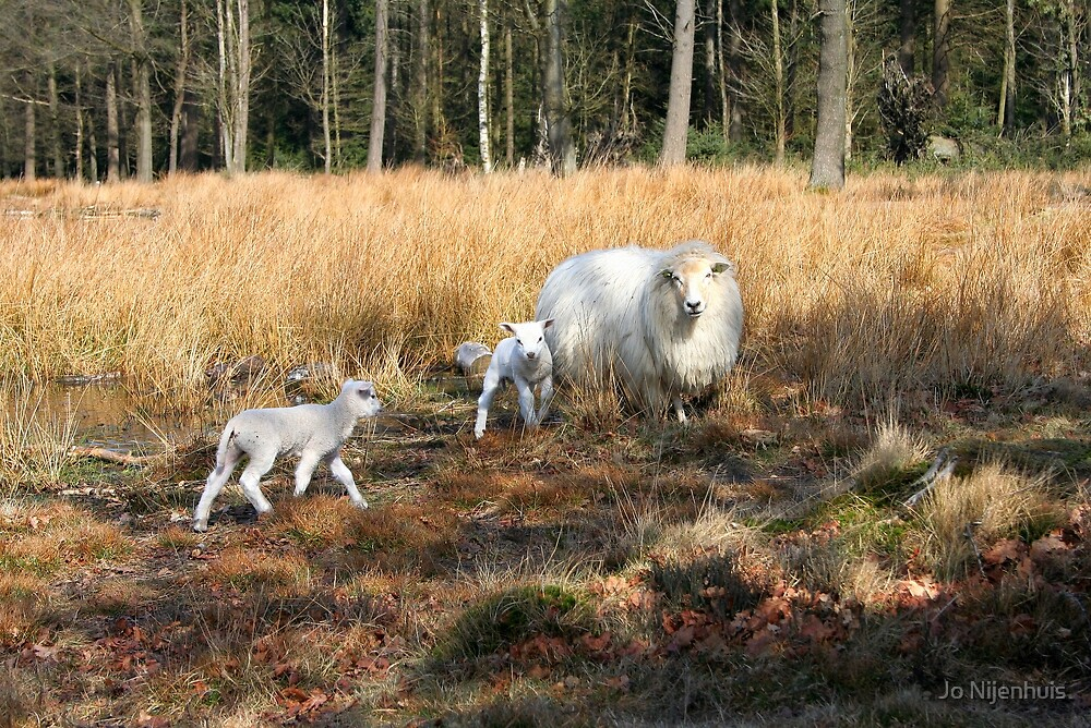 Proud Mom with her Little Lamb by Jo Nijenhuis