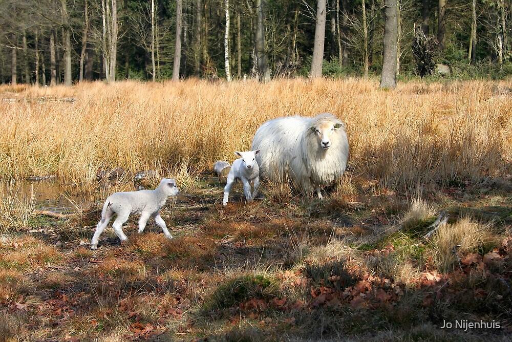 Proud Mom with her Little Lamb by Jo Nijenhuis