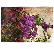 Tuscany Lilacs  Poster