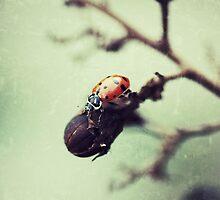Little lady by Kingstonshots