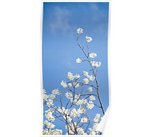White Blossoms Reaching Skyward Poster