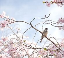 Cherry Blossoms and A Bird by Jarede Schmetterer