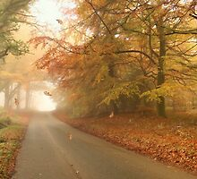 Autumn mist by Lyn Evans