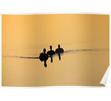 Gliding Silhouettes Poster