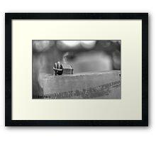 Padlocked Framed Print