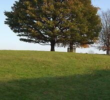 Knole Park by victor55