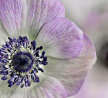 Fresh Anemones... by Bob Daalder
