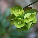 Hanging green bells by Chappy