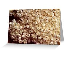 Xenia Coral Pulsing Greeting Card