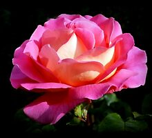 Sweet Rose of Allendale by Morag Bates