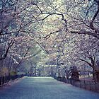 Spring Cherry Blossoms - Central Park - New York City by Vivienne Gucwa