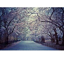 Spring Cherry Blossoms - Central Park - New York City Photographic Print