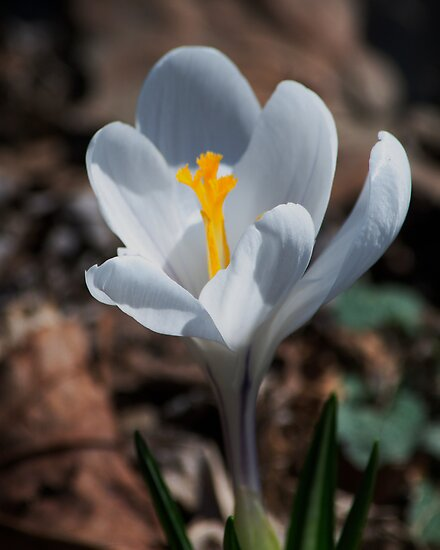 The Day of the Crocus by Barry Doherty