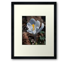 The Day of the Crocus Framed Print