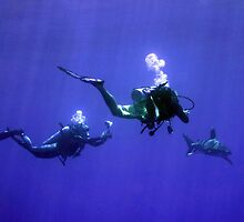Photographing an Oceanic Whitetip by SerenaB