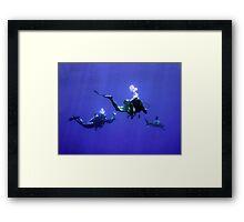 Photographing an Oceanic Whitetip Framed Print