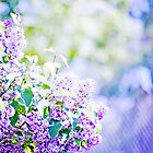 Hazy purple flowers by Sylvia Coomes