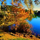 Orlando Park in December by AnnaMarie B