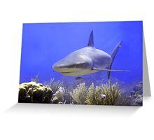 Shark Swimming Into Shot Greeting Card