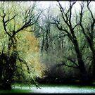 Emerald Woods © by Dawn M. Becker