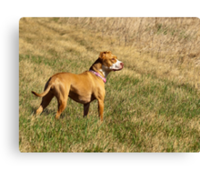 Shelby Who Sees All Canvas Print