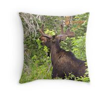 Bull Moose Eating From The Trees  Throw Pillow