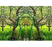 Fairy Arbor Photographic Print