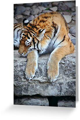 Sleeping Tiger Dancing Dreams by Jim  Egner