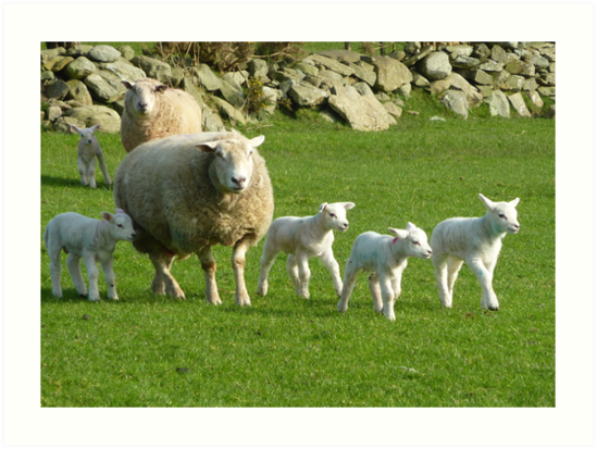 The Noise Of The Lambs by Fara