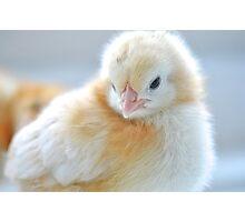Newborn Chick Photographic Print