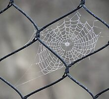 Web and Wire by Veronica Schultz