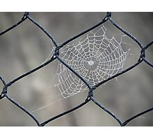 Web and Wire Photographic Print