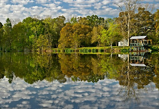 Morning on a Louisiana  pond by cclaude