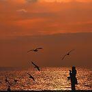 Bird Meets Birds by Graham Taylor