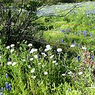 Wild flowers around Fence by Shiva77