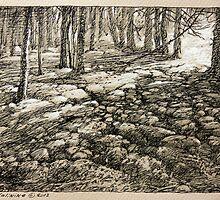 Mossy Rocks. Tobermory. by Guennadi Kalinine