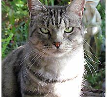 My Beautiful Mia.......... Photographic Print