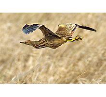 Straw Bird Photographic Print