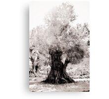 White Branches Canvas Print