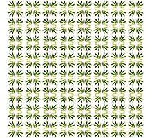 leafy Photographic Print
