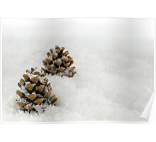 Fir Cones in a Snow Scene Poster