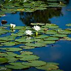 Water Lily #4 by Bryan W. Cole