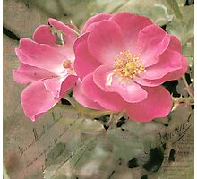 Imperfect Rose Photographic Print