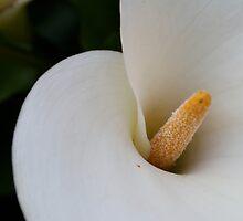 Flower ten by inessadinlija