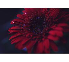 Flower twelve Photographic Print
