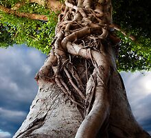 roots by yiorgoseressios