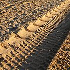 Tracks in the Sand, 2 by tenzil